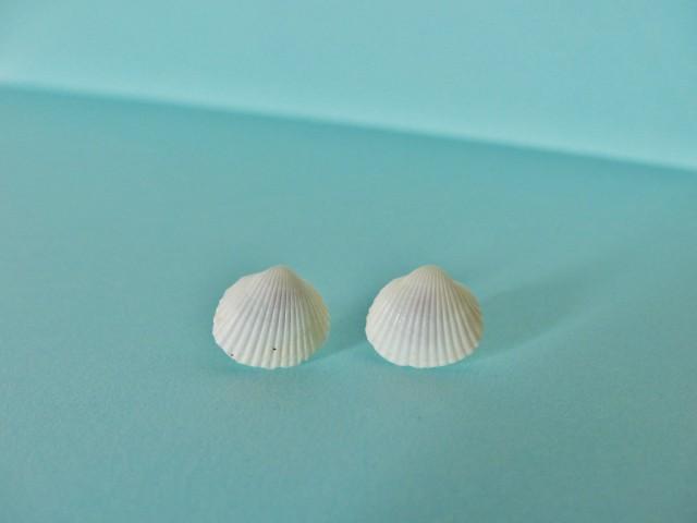 DIY Boucles d'oreilles coquillages