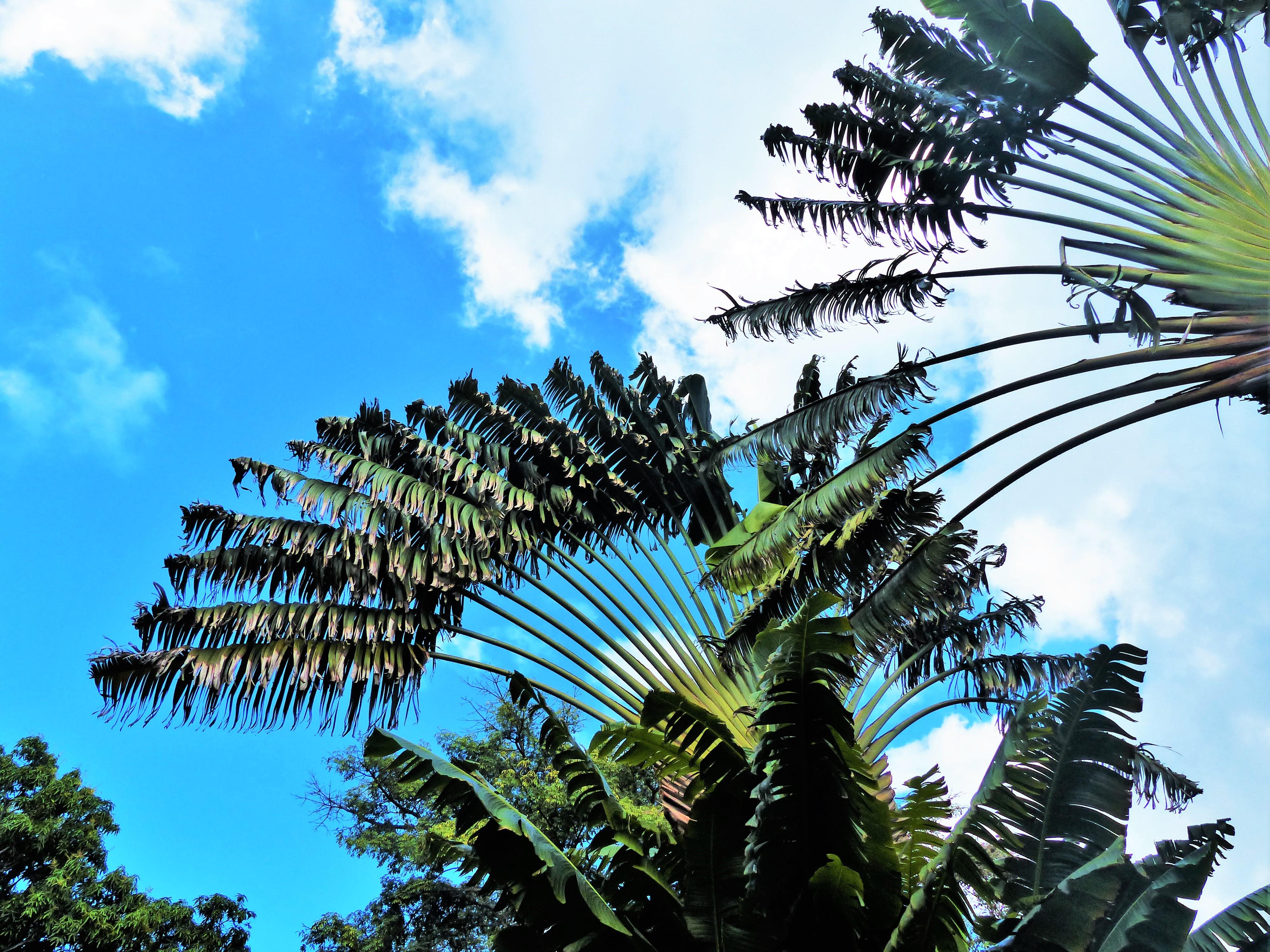 Jardin Botanique de Deshaies